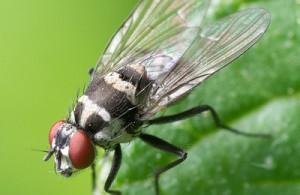 Petites mouches dans les plantes